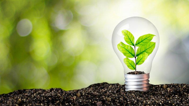 Nachhaltiges Handeln - Glühbirne mit Pflanze
