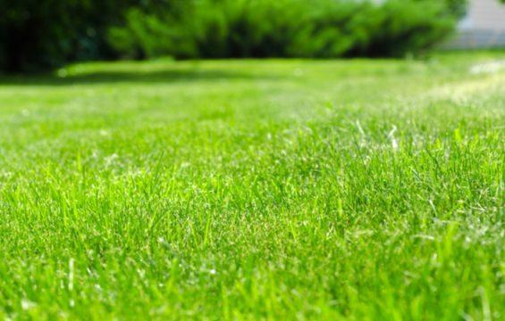 Schritt für Schritt zum perfekten Rasen